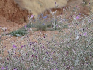Brave purple Flowers in red clay