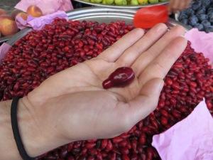 Kızılcık fruit