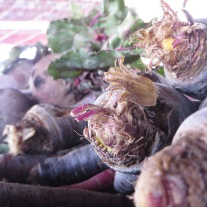 Beets & Turnips