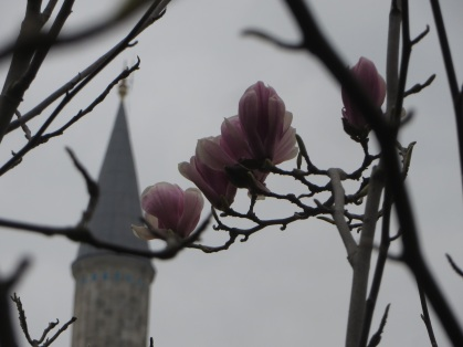 Spring at the Hagia Sophia