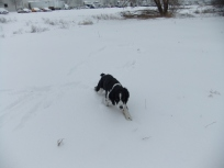 Snowplay