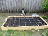 Remi plants a garden