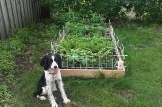 Remi weeds the garden