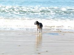 Beachcomber Remi
