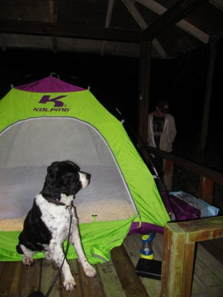Camping in Korea