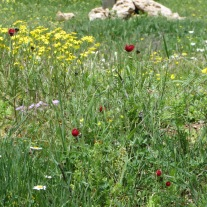 wild flowers in the valley
