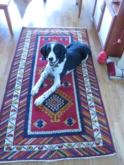 Remi showing off the carpet we bought