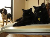 Remi and the cats -